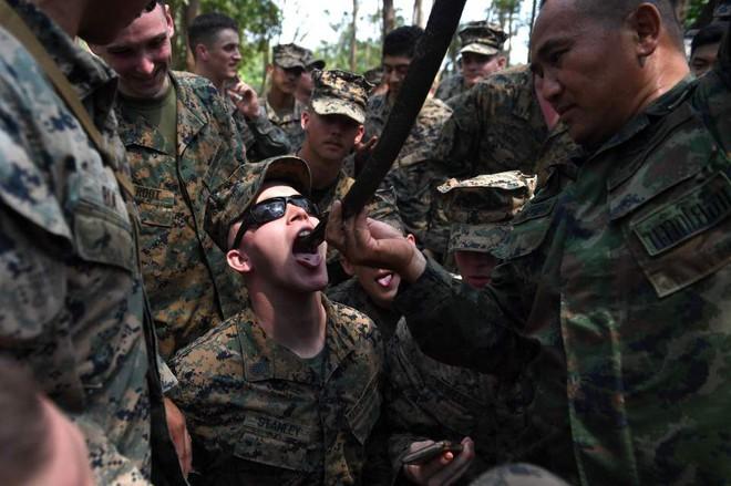 Lính Mỹ uống máu rắn hổ mang, nhai bọ cạp sống để sinh tồn - ảnh 2