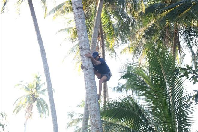 Mưu sinh trên những ngọn dừa ở đảo dừa Tam Hải - Ảnh 3.