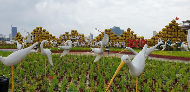 Cầu Vàng đọ dáng cầu Rồng ở đường hoa bên bờ sông Hàn  - Ảnh 6.