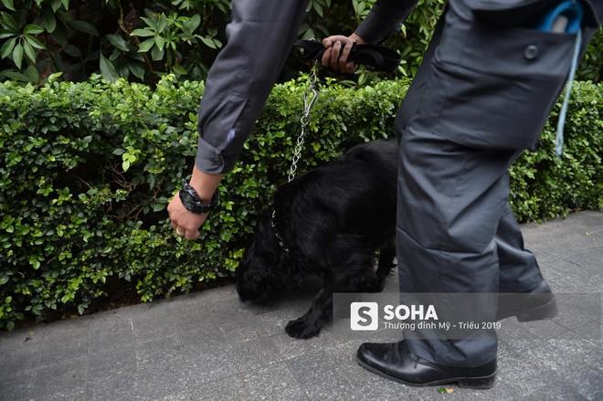 [Ảnh] 3 chú khuyển đặc biệt kiểm tra khách sạn Melia trước ngày Chủ tịch Kim Jong-Un đến Việt Nam - Ảnh 14.