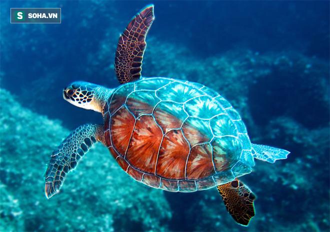Chuyên gia: 3 đặc điểm giúp rùa trở thành loài sống thọ nhất thế giới mà con người nên học - ảnh 1