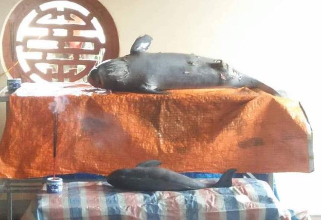 2 con cá voi nặng nửa tạ chết trên biển, dân lập bàn thờ để cúng - Ảnh 1.