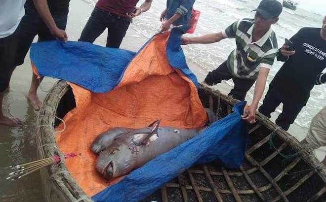 2 con cá voi nặng nửa tạ chết trên biển, dân lập bàn thờ để cúng