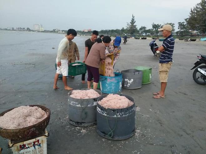 Ngư dân Đà Nẵng trúng đậm ruốc, hưởng lộc biển ngày cuối năm - Ảnh 4.