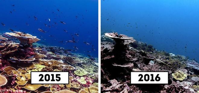 San hô trên đảo Giáng sinh, Úc
