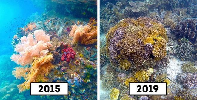 Rạn san hô trên quần đảo Raja Ampat, Indonesia