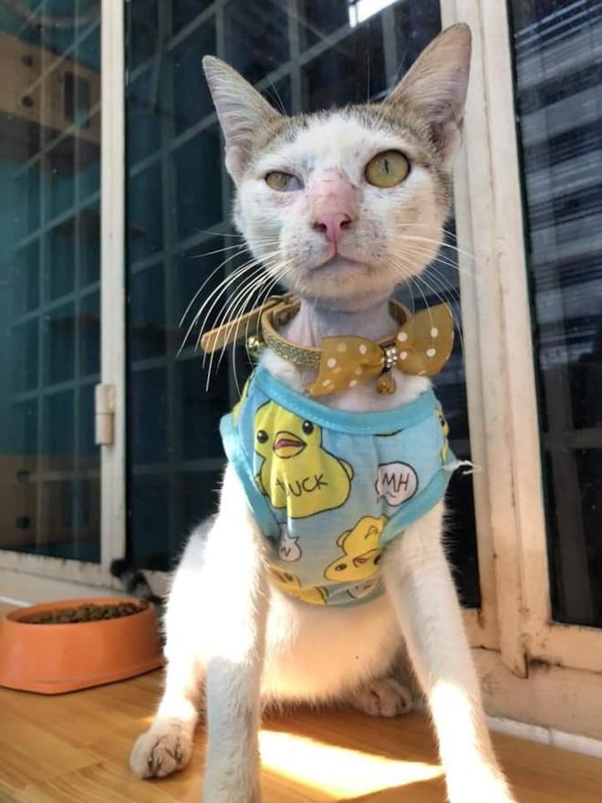 4 tuần hồi sinh kì diệu của chú mèo bị siết cổ, thịt thối rữa thành thú cưng chuẩn sang chảnh - ảnh 8