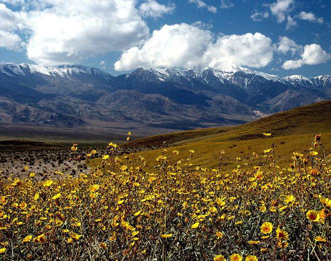 Hoa nở tại thung lũng