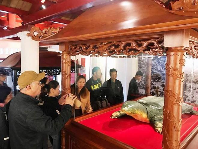 Tiêu bản cụ rùa hồ Gươm được đưa vào trưng bày ở đền Ngọc Sơn - Ảnh 5.