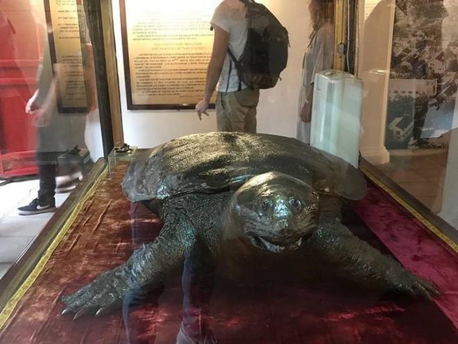 Tiêu bản cụ rùa hồ Gươm được đưa vào trưng bày ở đền Ngọc Sơn - Ảnh 6.
