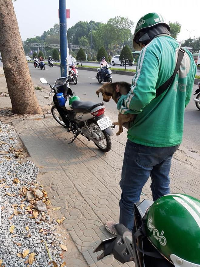 Ánh mắt ám ảnh của chú cún trơ xương nằm bên đường và hành động 'nghìn like' của tài xế Grab - ảnh 3