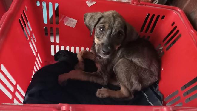 Ánh mắt ám ảnh của chú cún trơ xương nằm bên đường và hành động 'nghìn like' của tài xế Grab - ảnh 4