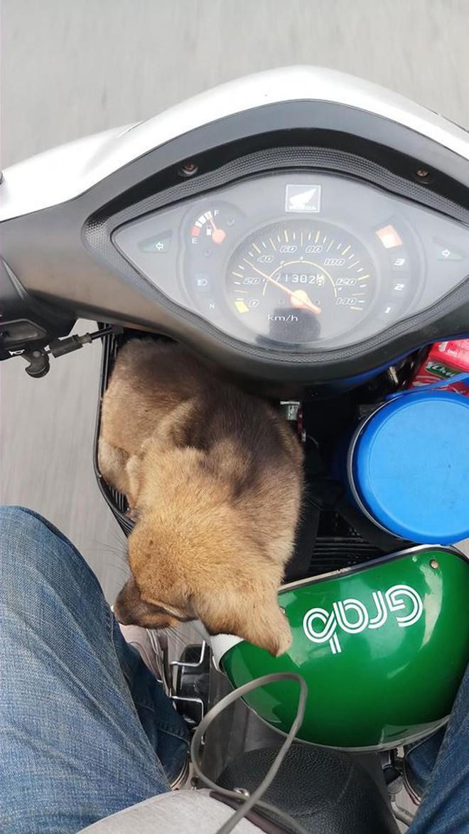 Ánh mắt ám ảnh của chú cún trơ xương nằm bên đường và hành động 'nghìn like' của tài xế Grab - ảnh 5