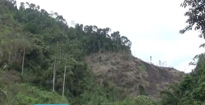 Công an vào cuộc điều tra vụ Phó Chủ tịch xã tham gia chặt phá rừng - Ảnh 1.