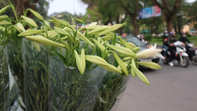 Loài hoa hái ra tiền bỗng dưng mất tích ở thủ phủ hoa Tây Tựu? - Ảnh 11.