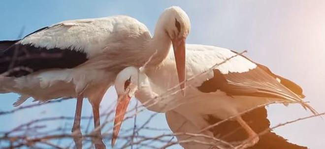 Cò đực bay 14 000 km suốt 17 năm để về gặp cò cái bị gãy cánh gây xúc động - Ảnh 5.