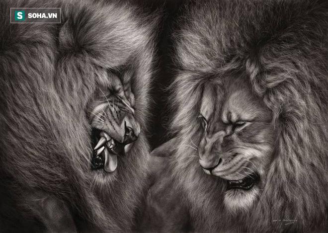 Tranh ăn với con đực, sư tử cái ăn đòn đủ, bị cắn gãy cả chân - Ảnh 1.