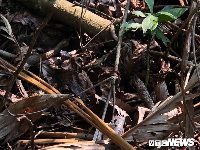 Dựng tóc gáy vào khu rừng lúc nhúc rắn độc trên dãy Hoàng Liên Sơn - Ảnh 6.
