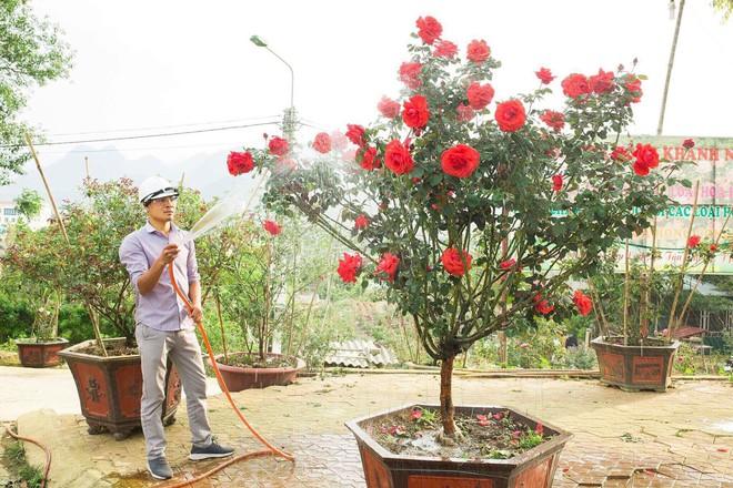 """Bỏ ngân hàng đi trồng hoa, chàng trai gây dựng vườn hồng bạc tỷ """"đẹp vạn người mê"""" - Ảnh 6."""