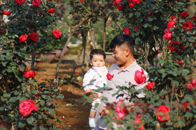 """Bỏ ngân hàng đi trồng hoa, chàng trai gây dựng vườn hồng bạc tỷ """"đẹp vạn người mê"""" - Ảnh 5."""