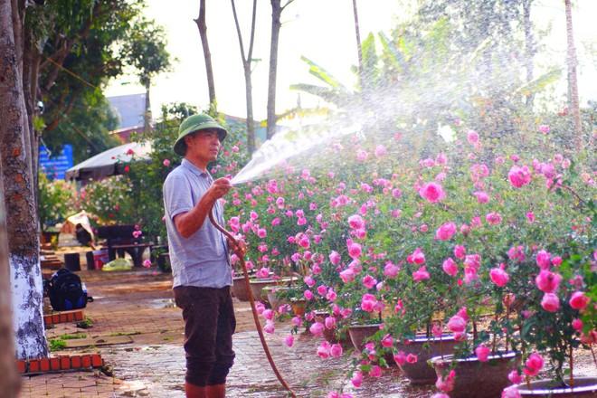 """Bỏ ngân hàng đi trồng hoa, chàng trai gây dựng vườn hồng bạc tỷ """"đẹp vạn người mê"""" - Ảnh 8."""