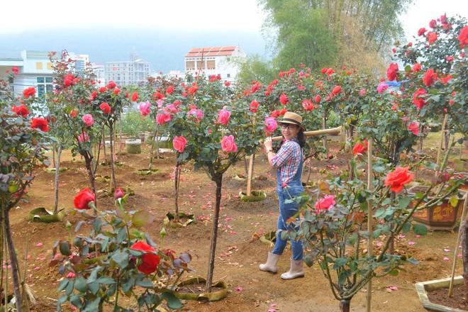 """Bỏ ngân hàng đi trồng hoa, chàng trai gây dựng vườn hồng bạc tỷ """"đẹp vạn người mê"""" - Ảnh 3."""