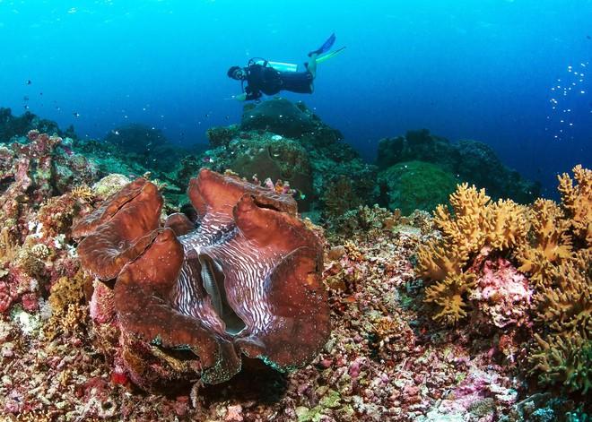 Dân TQ săn lùng báu vật ở Scarborough khiến Philippines không thể im lặng - ảnh 2