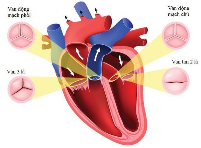 Nhận biết triệu chứng hở van tim để sớm giảm mệt mỏi, khó thở - Ảnh 1.