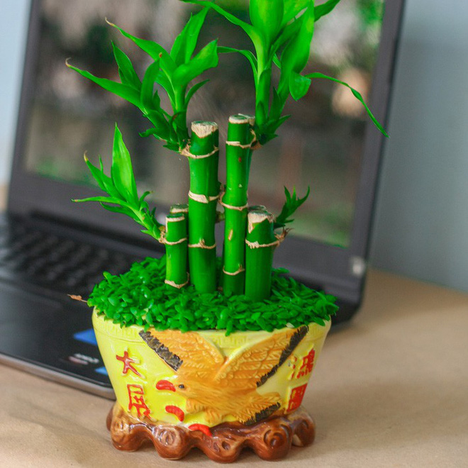 những loại cây cảnh hút tài lộc nên trồng trong nhà để tiền vào như nước - ảnh 5.