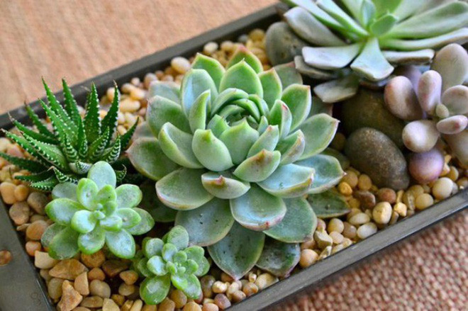 những loại cây cảnh hút tài lộc nên trồng trong nhà để tiền vào như nước - ảnh 10.