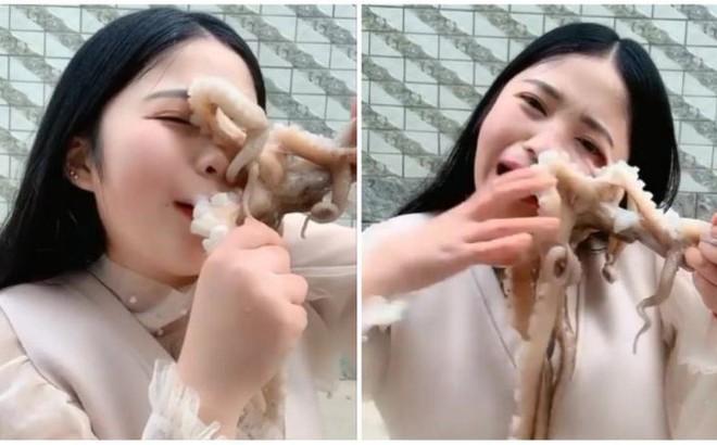 Hot girl livestream cảnh ăn bạch tuộc sống, bị con vật tấn công đến chảy máu nhưng dân mạng lại còn mắng cho vì lý do này
