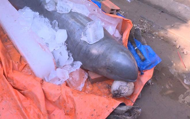 Người dân bắt được cá lạ khủng nghi thuộc loại quý hiếm sắp tuyệt chủng trên sông Cổ Chiên - Ảnh 4.