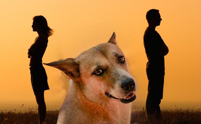 Việt Nam phong tục: Sự tích vợ giết chó khuyên chồng - chuyện không phải ai cũng biết!