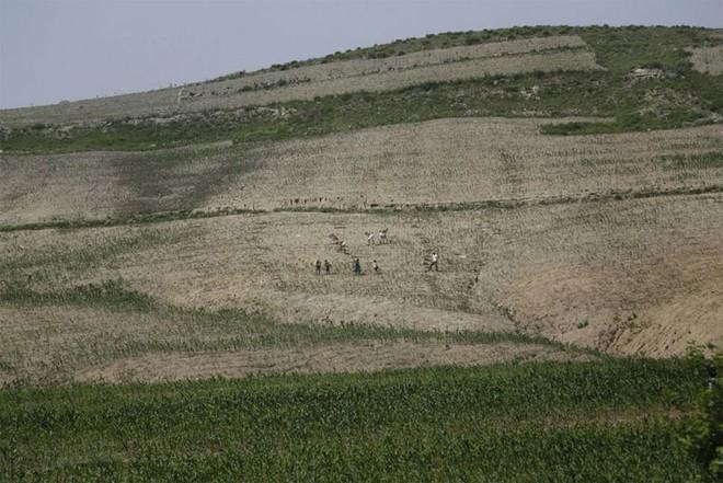 Cảnh dân Triều Tiên vật vã chống hạn trên đồng, xin viện trợ khẩn - Ảnh 3.