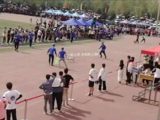 MXH Trung Quốc xôn xao vì một chú chó: Đòi chụp kỷ yếu, chạy thi cùng sinh viên - ảnh 3