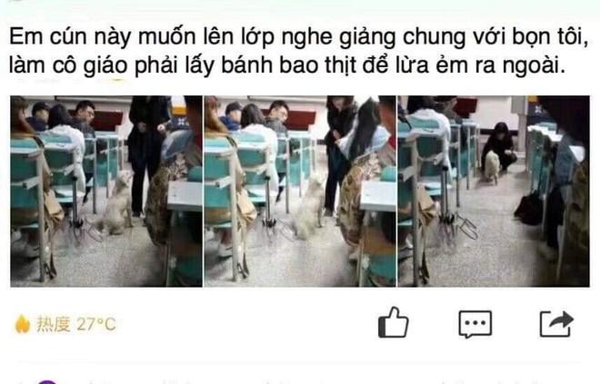MXH Trung Quốc xôn xao vì một chú chó: Đòi chụp kỷ yếu, chạy thi cùng sinh viên - ảnh 5