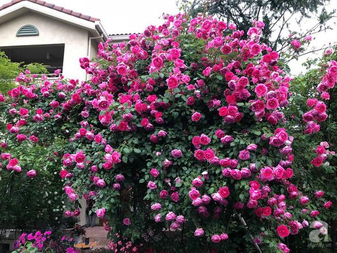 Khu vườn hoa hồng trước nhà đẹp như cổ tích của người đàn ông Việt ở Nhật - Ảnh 11.