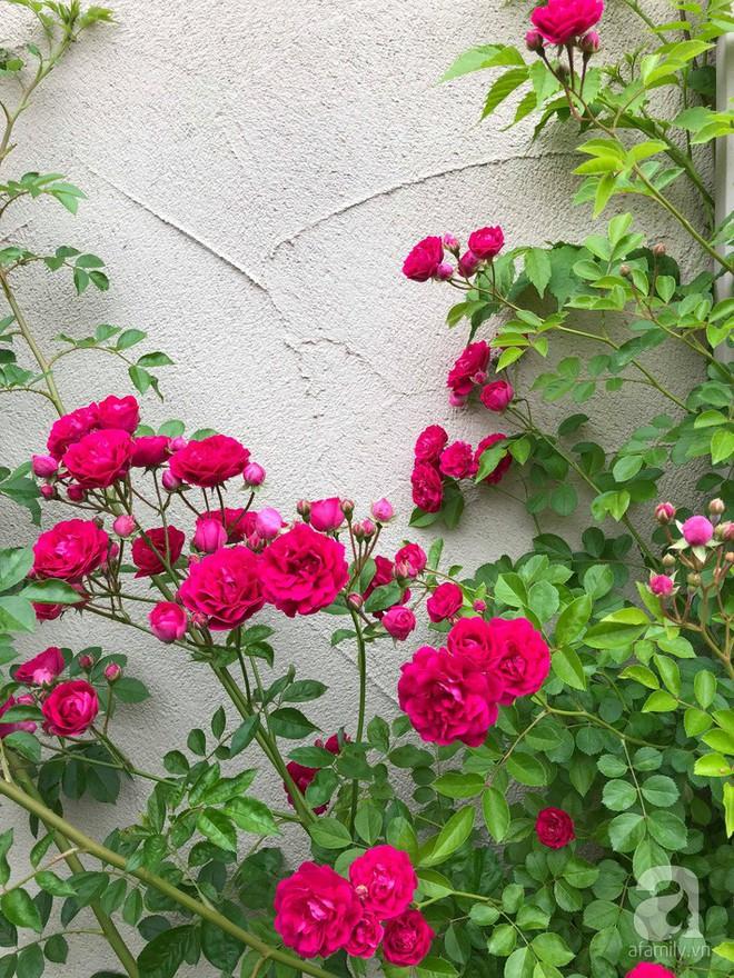 Khu vườn hoa hồng trước nhà đẹp như cổ tích của người đàn ông Việt ở Nhật - Ảnh 14.