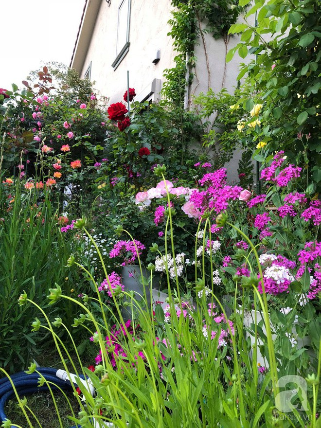 Khu vườn hoa hồng trước nhà đẹp như cổ tích của người đàn ông Việt ở Nhật - Ảnh 17.