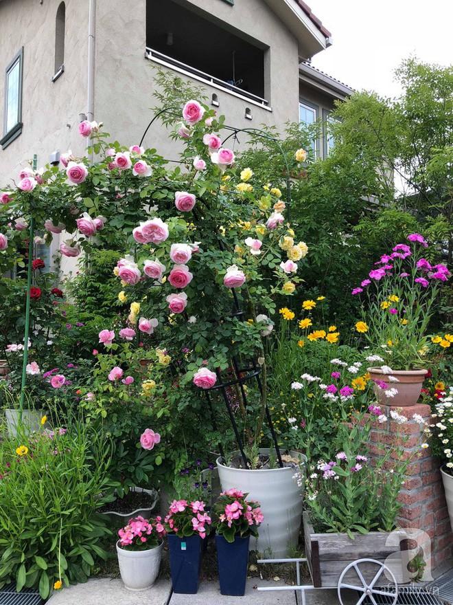 Khu vườn hoa hồng trước nhà đẹp như cổ tích của người đàn ông Việt ở Nhật - Ảnh 3.