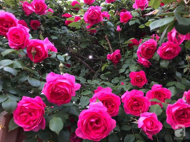 Khu vườn hoa hồng trước nhà đẹp như cổ tích của người đàn ông Việt ở Nhật - Ảnh 6.