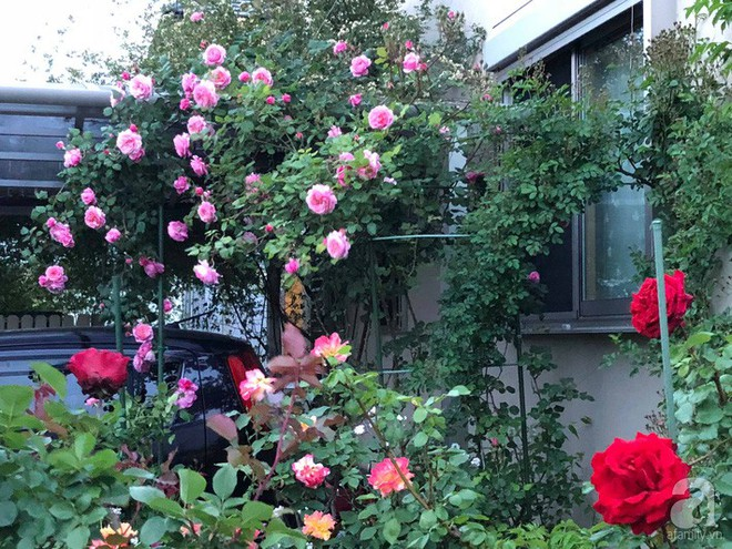 Khu vườn hoa hồng trước nhà đẹp như cổ tích của người đàn ông Việt ở Nhật - Ảnh 7.