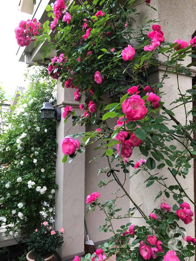 Khu vườn hoa hồng trước nhà đẹp như cổ tích của người đàn ông Việt ở Nhật - Ảnh 10.