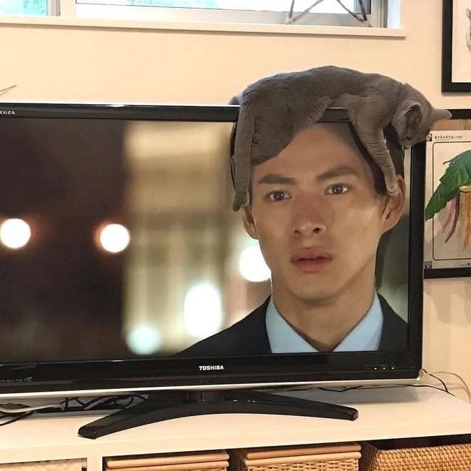 Anh chàng trên ti vi có mái tóc thật là kì lạ, à không nhìn kĩ lại thì đó là một con mèo đang nằm vắt vẻo trên ti vi!