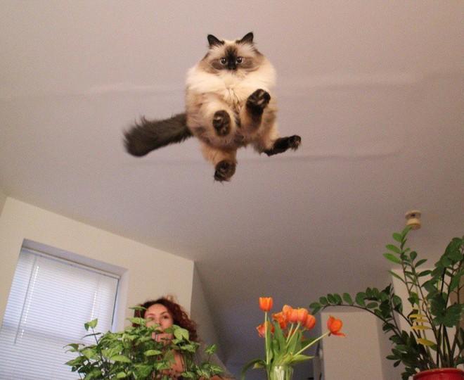 Bay lên nào là em bay lên nào!