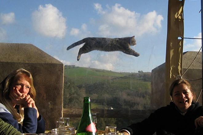 Hai người phụ nữ đang chụp ảnh kỉ niệm ngày lễ nhưng con mèo đang bay trên bức ảnh mới là điều đáng chú ý!