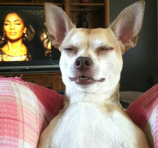 Chú chó đang tận hưởng cuộc sống của mình và hãy nhìn ra đằng sau nhé, cũng có một người đang cảm thấy tương tự đấy!