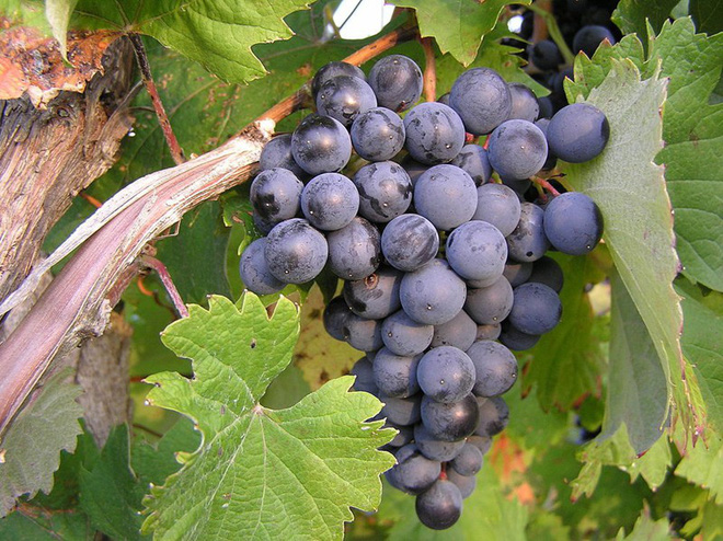 Một số loại trái cây giúp cải thiện sinh lý nam - Ảnh 4.