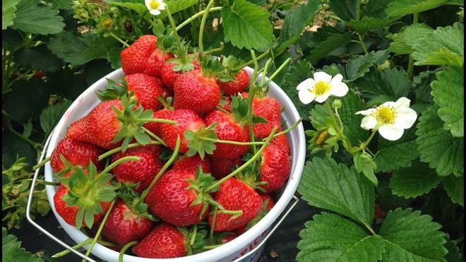 Một số loại trái cây giúp cải thiện sinh lý nam - Ảnh 5.