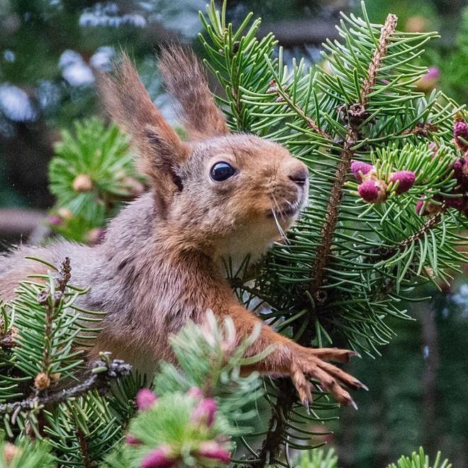 Trong mắt những loài động vật nhỏ bé, thế giới chuyển động chậm hơn bình thường.